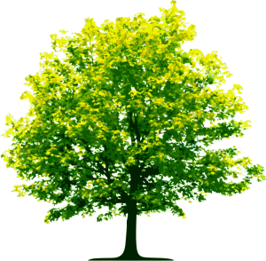 tree_PNG224-1024x1003