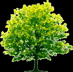 tree_PNG224-1024x1003